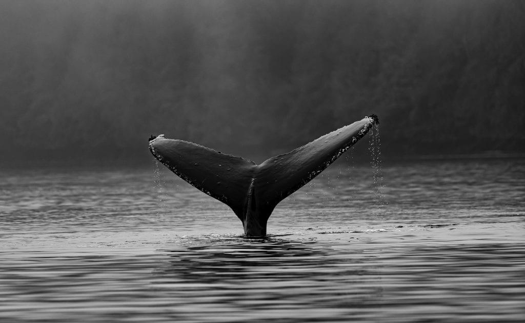 ilustrasi jenis phising whaling