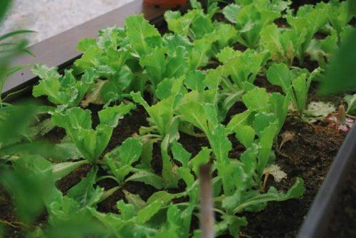 bisnis modal kecil-usaha pertanian organik
